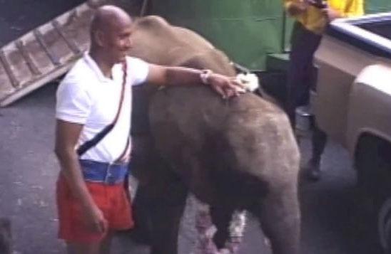 Elephant lift 1986